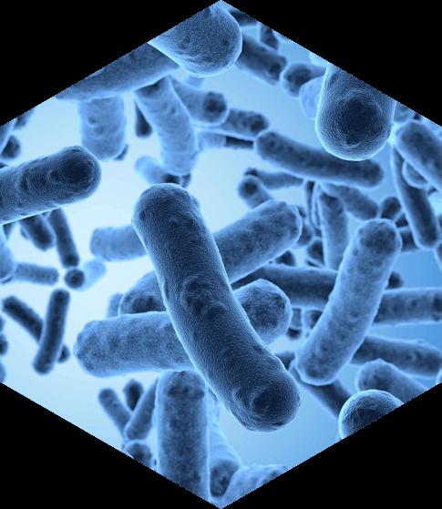 Бактериологические исследования