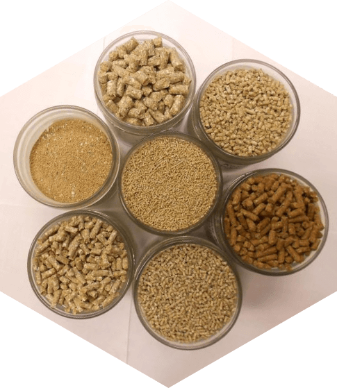 Химико-токсикологические исследования кормов